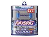 RAYBRIG RA68 [�n���Q�� �z���C�g�T���_�[ 4000K H11]